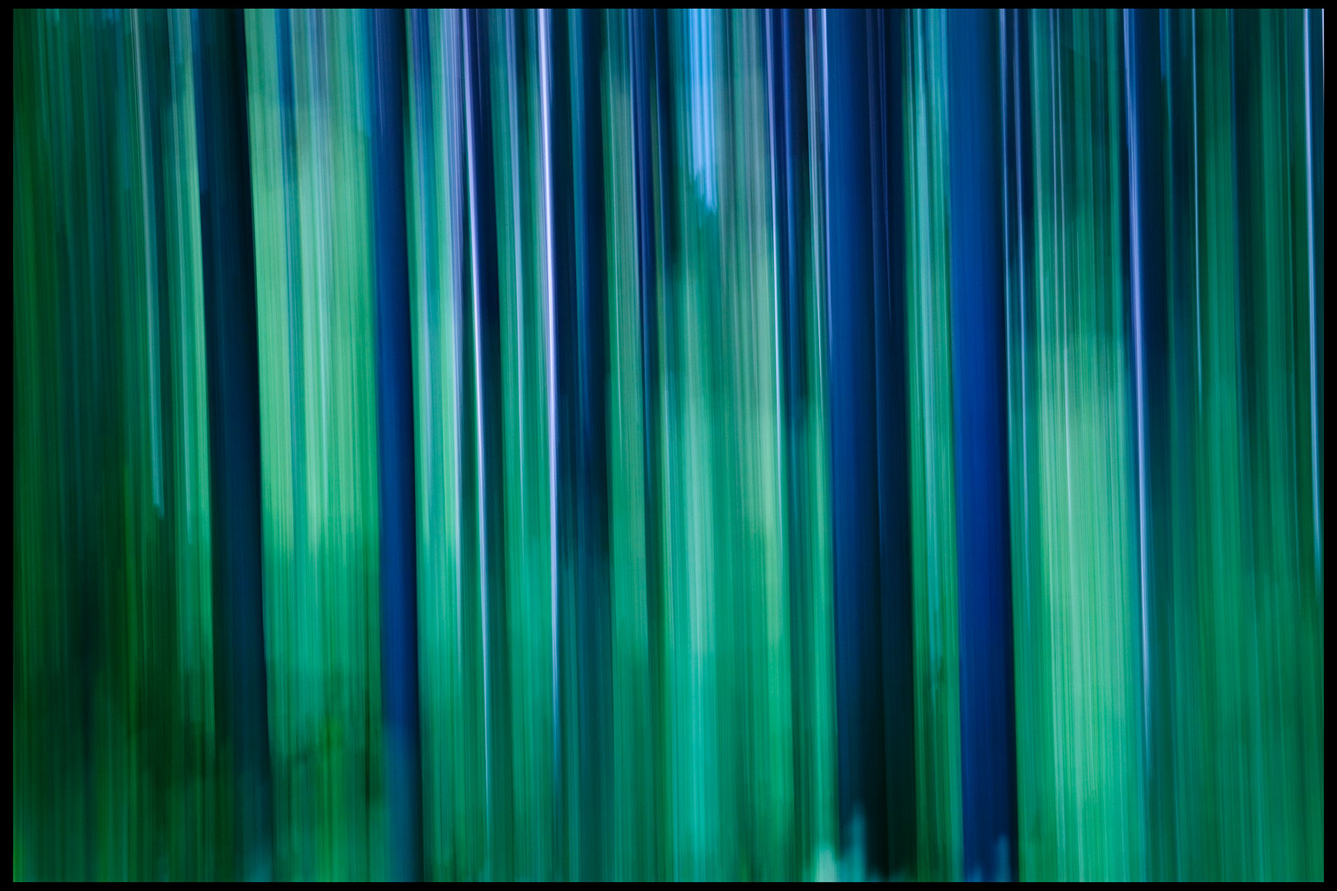 blur_trees_wisconsin-02