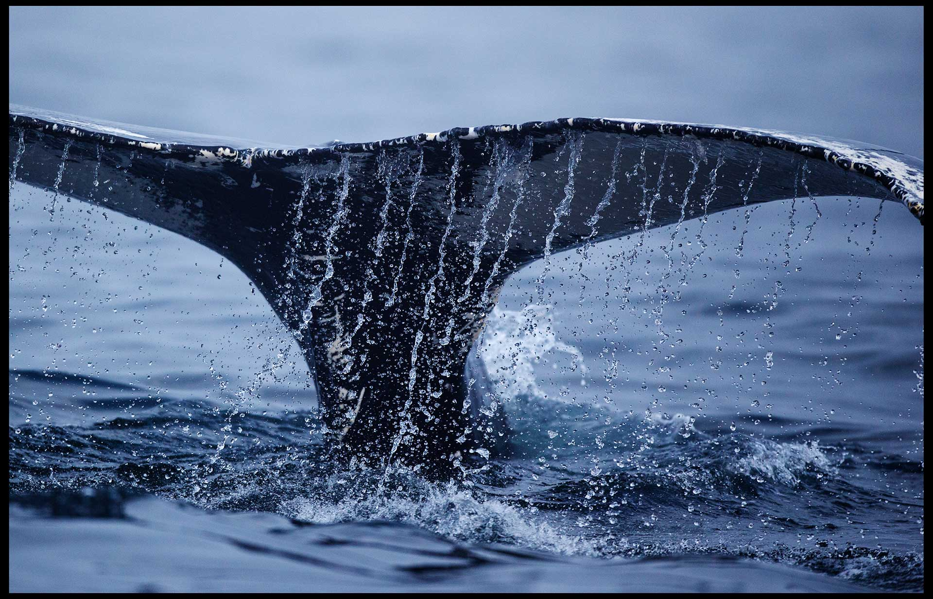 whales_july2014_part2-raw-0213