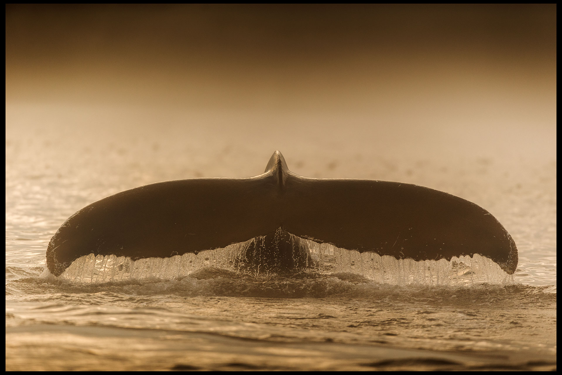 whales_july2014_part2-raw-0230