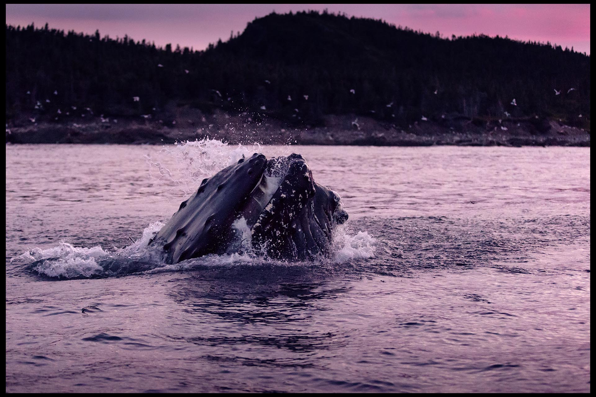 whales_july2017_part4-02clrlr